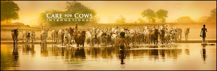 приют Care for Cows
