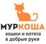 """Приют для кошек """"Муркоша"""""""