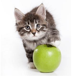 Kitty вегетарианский котенок